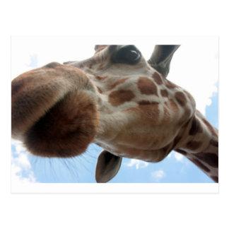 Extreme Giraf Briefkaart
