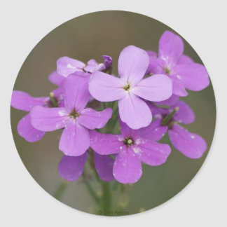 F0019 de Paarse Raket van Wildflowers Dames Ronde Sticker