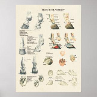 Farrier van de Anatomie van het Been van de Hoef Poster