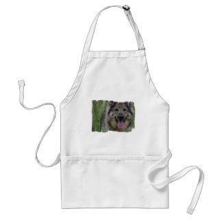 Finse Schort Lapphund