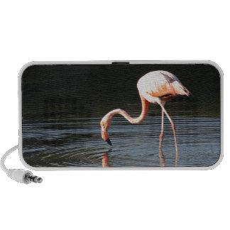 Flamingo Reis Speakers