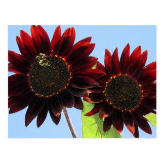Fluweel Koningin Sunflowers Briefkaart