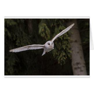 Flying owl kaart