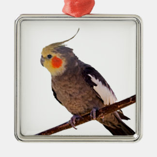 Foto van de Vogel van het Huisdier van Cockatiel Zilverkleurig Vierkant Ornament