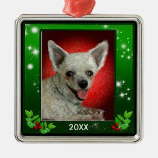 Foto van het Huisdier van de Grens van de Zilverkleurig Vierkant Ornament