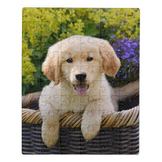 Foto van het Huisdier van het Puppy van de Hond