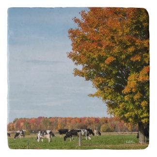foto van koeien met boom trivet
