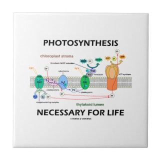 Fotosynthese Noodzakelijk voor Light-Dependent het Tegeltje