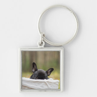 Frans buldog het gluren puppy zilverkleurige vierkante sleutelhanger
