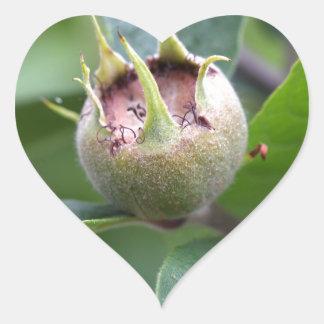 Fruit van de gemeenschappelijke mispel hart sticker