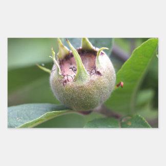Fruit van de gemeenschappelijke mispel rechthoekige sticker