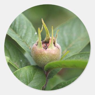 Fruit van de gemeenschappelijke mispel ronde sticker