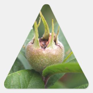 Fruit van de gemeenschappelijke mispel sticker