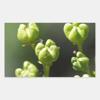 Fruit van gemeenschappelijk rue (Ruta graveolens) Rechthoekige Sticker