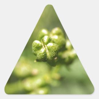 Fruit van gemeenschappelijk rue (Ruta graveolens) Sticker