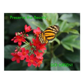 GA GROEN! De Kleuren van de vlinder van de Lente Briefkaart