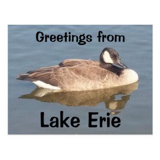 Gans op Meer Erie Briefkaart