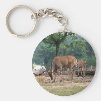 Gazelle, wilde dierlijke dierentuin, 羚. sleutelhanger
