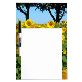 Gebied van Zonnebloemen, Zonnebloem 01.2 Whiteboards