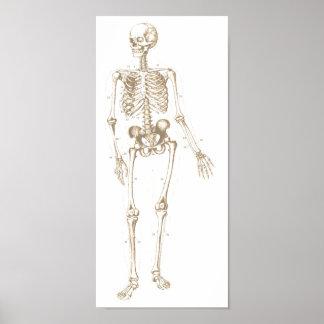 Gebleekt Skelet Poster