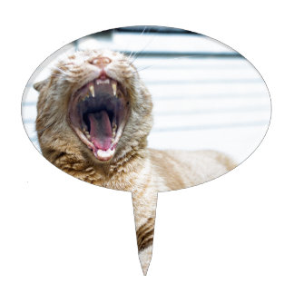 Gebrul zoals een Kat Taart Prikker