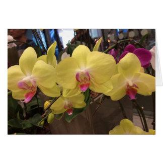 Geel de orchideewenskaart van Singapore Wenskaart