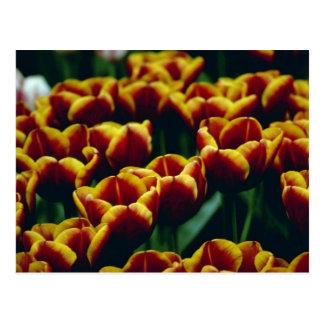 geel Detail van de Pas ontwikkelde bloemen van Briefkaart