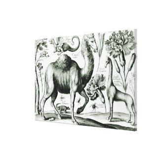 Gegraveerde studie van Dieren en Bloemen, Canvas Prints