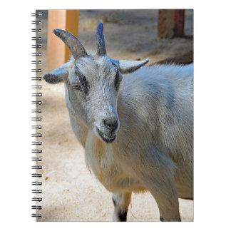 Geit 540 ringband notitieboek