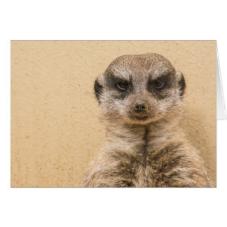 Gekke Lege Kaart Meerkat