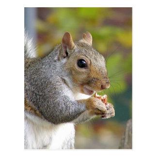 Gekregen noten? briefkaart