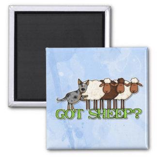 gekregen schapen magneet