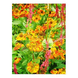 Gele Bloemen Echinacea Briefkaart