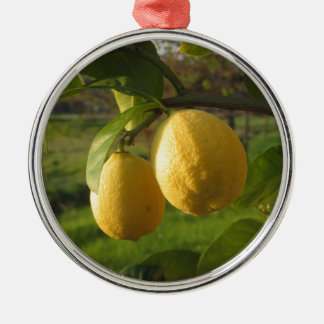 Gele citroenen die op de boom bij zonsondergang zilverkleurig rond ornament