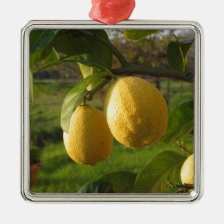 Gele citroenen die op de boom bij zonsondergang zilverkleurig vierkant ornament