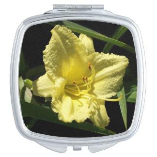 Gele Daylily Bloem Hemerocallis Reisspiegeltjes