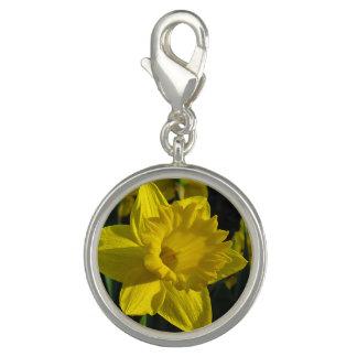 Gele gele narcis charm