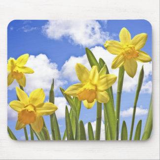 Gele gele narcissen in de lente in Nederland Muismat