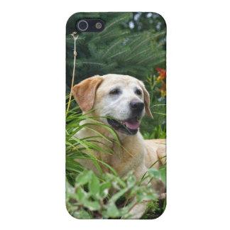 Gele Labrador in een bloemtuin iPhone 5 Cover