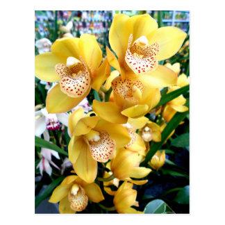 Gele Orchideeën Cymbidium Briefkaart