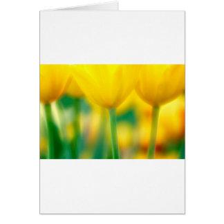 Gele Tulpen met Groen Kaart