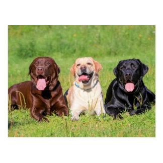 Gele & Zwarte Labradors de van de chocolade, Briefkaart