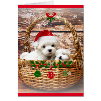 Gelukkig Vakantie: Maltees Puppy Briefkaarten 0