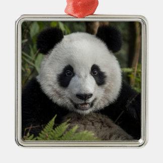 Gelukkige jonge panda, China Zilverkleurig Vierkant Ornament