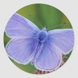 Gemeenschappelijke Blauwe Vlinder Ronde Sticker