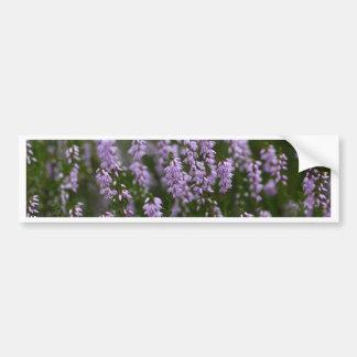Gemeenschappelijke Heide (vulgaris Calluna) Bumpersticker