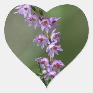 Gemeenschappelijke Heide (vulgaris Calluna) Hart Sticker
