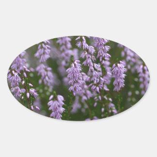 Gemeenschappelijke Heide (vulgaris Calluna) Ovale Sticker