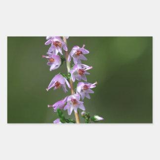 Gemeenschappelijke Heide (vulgaris Calluna) Rechthoekige Sticker