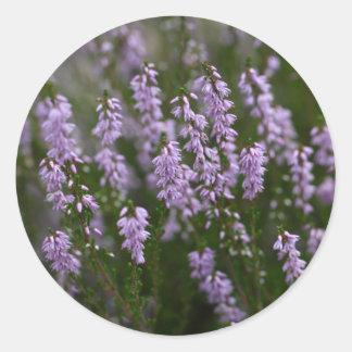 Gemeenschappelijke Heide (vulgaris Calluna) Ronde Sticker